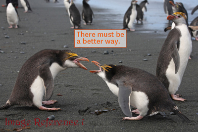 Two penguins fighting